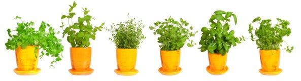 Border of fresh herbs Royalty Free Stock Image