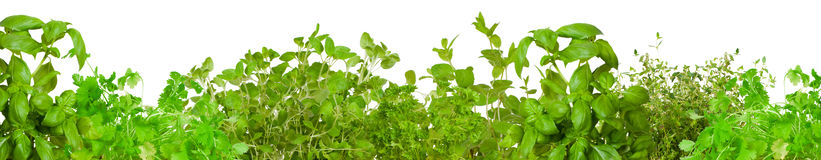 Border of fresh herbs Royalty Free Stock Images