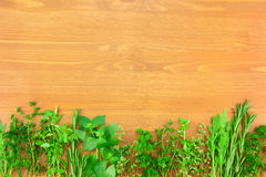 Border of Fresh Herbs Collection. On Vintage Wooden Table with copy spase for your text Royalty Free Stock Images