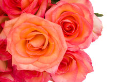 Border of fresh  pink  roses Royalty Free Stock Photo