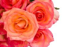 Border of fresh  pink  roses Royalty Free Stock Photo