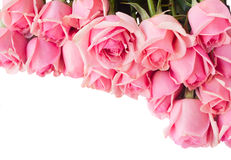Border of fresh pink  roses Stock Image