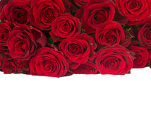 Border of fresh red   roses pile Stock Photography