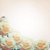 Border from fresh roses Stock Photo