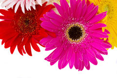 Border of gerbera flowers Royalty Free Stock Photo