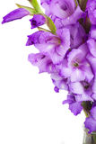 Border of gladiolus flowers Royalty Free Stock Photography