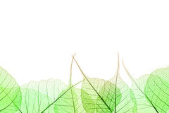 Border of Green Leaves isilated on white Stock Photos