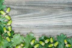 Border of green oak leaves and acorns Stock Image