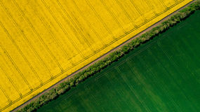 Border between a green and a yellow colza fields stock image