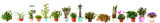 Border of houseplant in  pots Royalty Free Stock Images