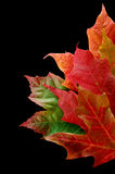 Border of leaves. Several leaves on black background Stock Image