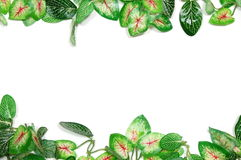 Border of leaves Royalty Free Stock Image