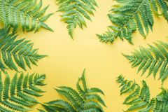Border leaves of fern on yellow. Top view, copy space. Summer background. Border of fern leaves on punchy yellow. Top view with copy space. Summer vacation stock photography