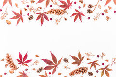Border made of autumn leaves, dried flowers and pine cones on white background. Flat lay, top view, copy space. Border made of autumn leaves, dried flowers and stock image