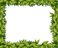 Border made of leaves Stock Photography