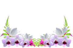 Border made out of exotic orchids Stock Photos