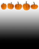 Border of mini pumpkins on white and black. This stock photo features a white and black graduated background and a row of mini pumpkins as a border Stock Photography