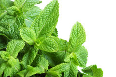 Border of mint Stock Image
