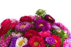Border of mixed aster flowers Stock Photo