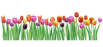 Border with multicolor vector tulips royalty free illustration
