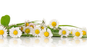 Free Border Of Daisy Royalty Free Stock Image - 9079926