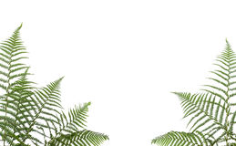 Free Border Of Ferns Stock Images - 8069444