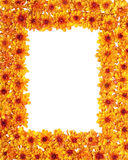 Border of orange chrysanthemum Stock Image