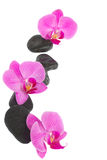 Border of orchid and zen stones Royalty Free Stock Photo