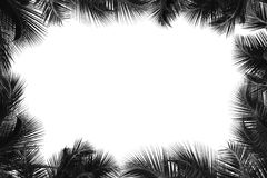 Border of palm tree Royalty Free Stock Photos