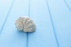 Border pattern of white sea shells on blue wooden table Stock Photos