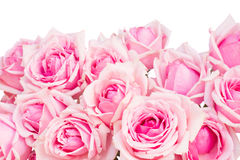 Border of  pink garden roses Royalty Free Stock Image