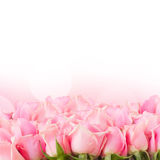 Border of  pink garden roses Royalty Free Stock Images