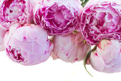 Border of pink peonies Stock Images