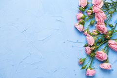 Border from pink roses flowers on  light blue textured backgroun Royalty Free Stock Photo