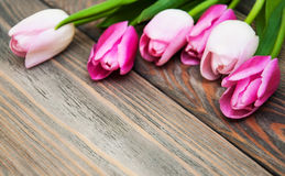Border with pink tulips Royalty Free Stock Photo