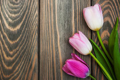Border with pink tulips Stock Photo