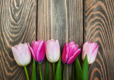 Border with pink tulips Royalty Free Stock Images