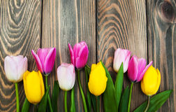 Border with pink and yellow tulips Royalty Free Stock Image