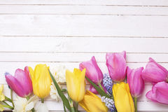 Border from pink, yellow, white and blue spring tulips and da royalty free stock photography