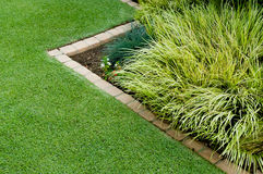 Border plants Miscanthis sinensis. Hen and chicken plants (Miscanthus sinensis) with a stone border and green lawn royalty free stock images
