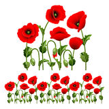 Border from poppies. Border from red poppies.(can be repeated and scaled in any size Royalty Free Stock Photo