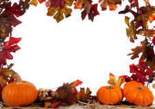 Border of pumpkins on hay on white Stock Image