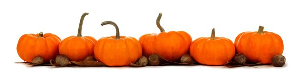 Border of pumpkins with leaves and nuts isolated on white Royalty Free Stock Image