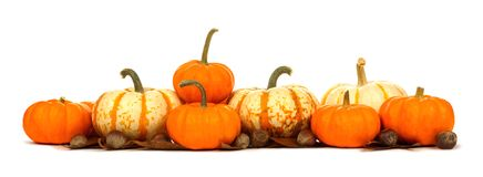 Border of pumpkins with leaves and nuts isolated on white Royalty Free Stock Photos
