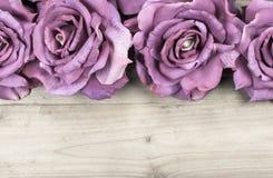 Border Purple Roses Stock Photo