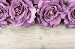 Border purple roses. Purple roses  on wood background Stock Photo