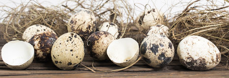 Border quail eggs. Border with speckled quail eggs and dry grass on wooden table. Side view of whole and broken eggs. Easter concept royalty free stock photography