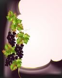 Border with red grapes, cdr vector. Border with red grapes and rusty leaves, vector format Royalty Free Stock Photo