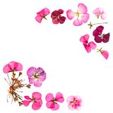 Border of red pink brown geranium perspective, part of frame mad stock image