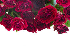 Border of red and pink roses Stock Photos